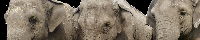 ElephantGroup